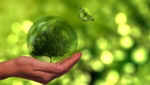 Jak być etycznym wszystkożercą, czyli o jedzeniu dla dobra środowiska