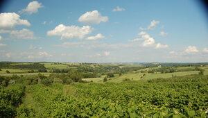 Rośnie rynek win owocowych premium w Polsce