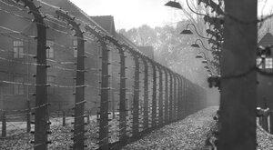 Po drugiej stronie Auschwitz. Jak Polacy pomagali więźniom