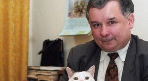 Kot – zwierzę polityczne