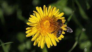 Alergia na jad owadów może zabić. Teraz jest dobry czas na rozpoczęcie...