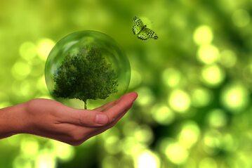 Ekologia, zdjęcie ilustracyjne