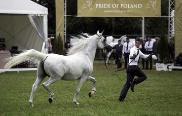 Janów Podlaski. Aukcja Pride of Poland